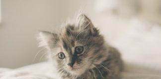 """perché i gatti """"fanno il pane"""""""