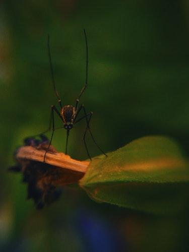 Scopri i rimedi naturali anti-zanzare