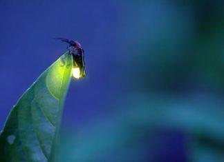 Bioluminescenza