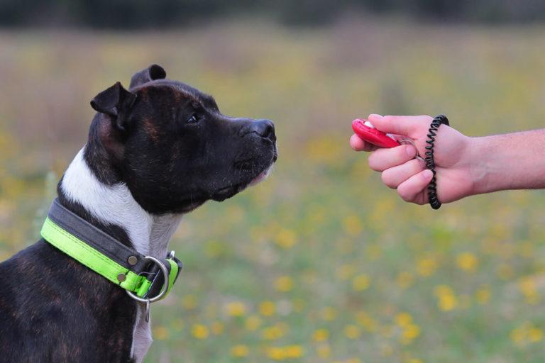 Addestramento del cane: metodo Clicker training e richiamo e ricompensa