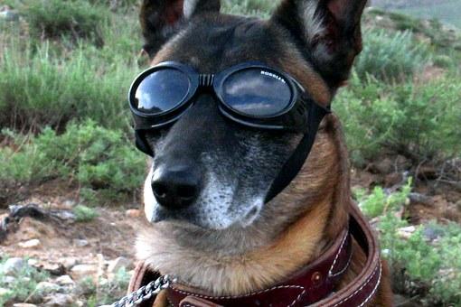 Stai pensando di far addestrare il tuo cane? Sei sicuro di cosa significa addestramento?