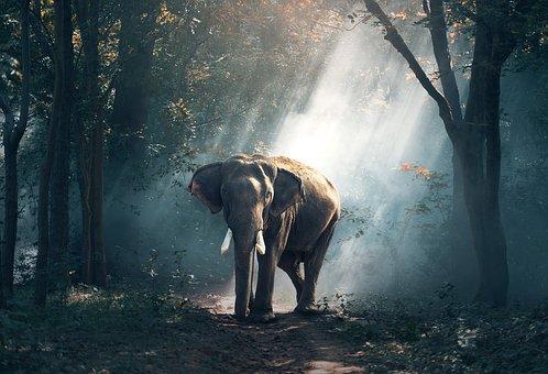 La memoria degli elefanti è vera o solo leggenda?