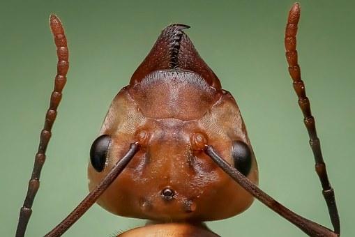 Scopriamo il piccolo grande mondo delle formiche!