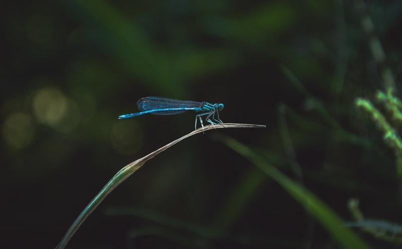 La tragica scomparsa degli insetti, un danno irreparabile per il pianeta!