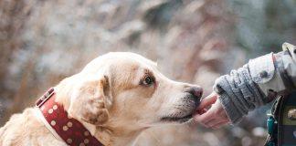 Baciare il cane