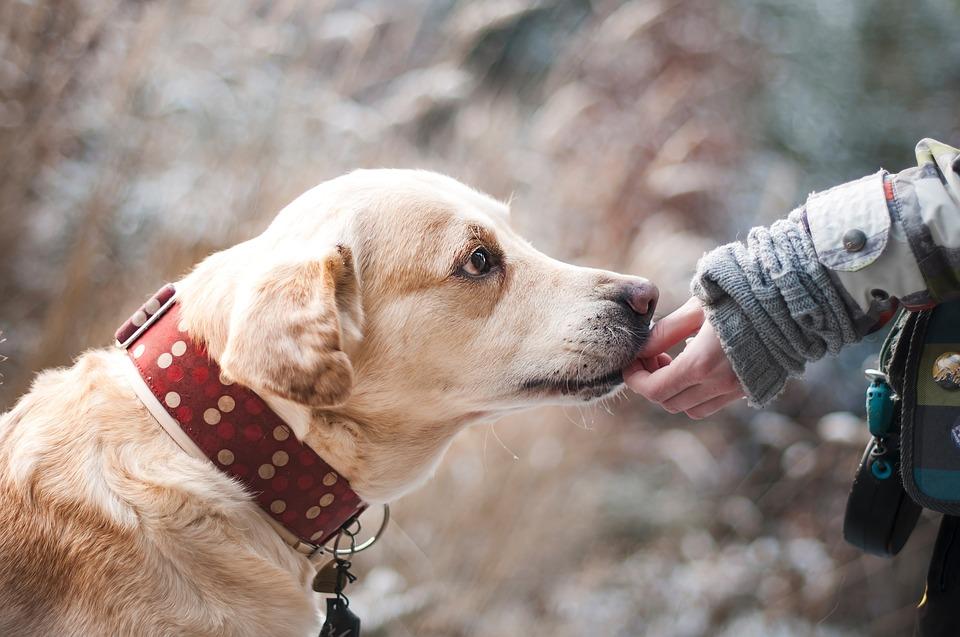 Baciare il cane fa bene o è meglio evitare?