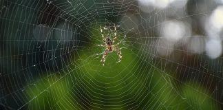 tela del ragno