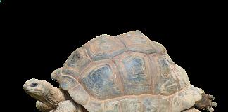 animali più longevi del pianeta
