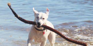 benefici del mare per i cani