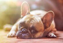 Come proteggere gli animali dal caldo?