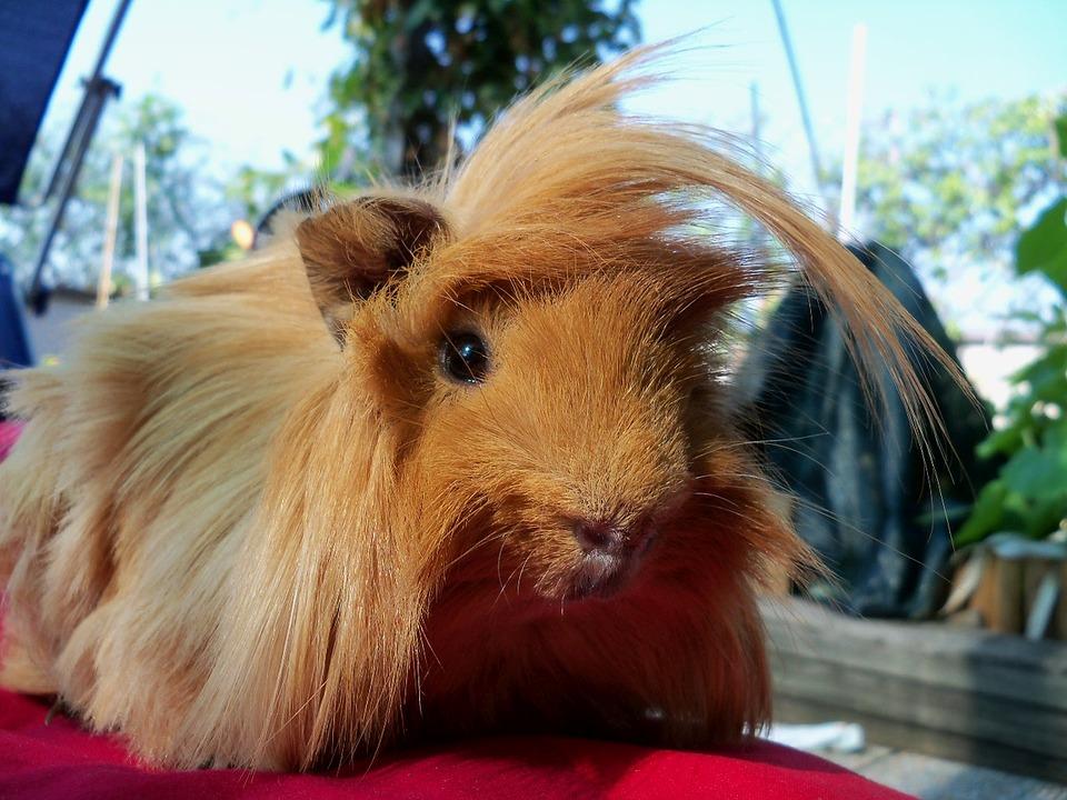 Quali animali domestici esotici e strani si possono tenere in casa ? | Mondo Animali
