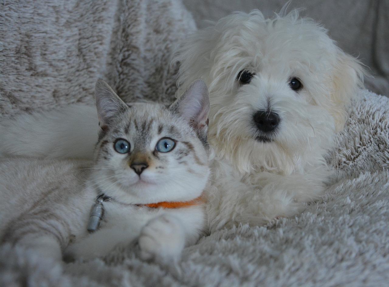 Alleviare efficacemente le allergie alimentari in cani e gatti