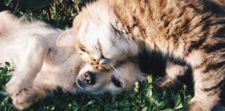 cani e gatti domestici benessere animali